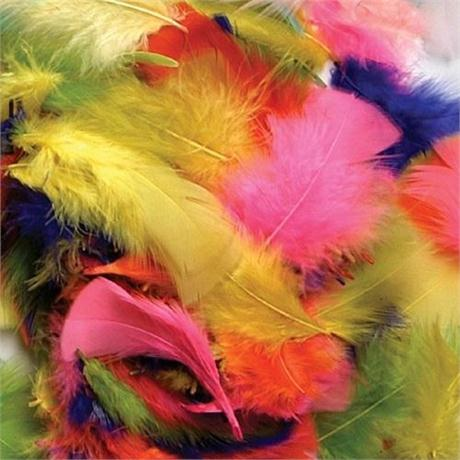 Turkey Plumage Bright Hues Image 1