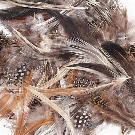 Natural Spotted Feathers Image 1