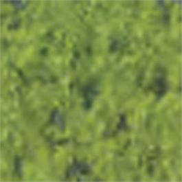 Caran d Ache Pastel Cube 245 Light Olive 40% thumbnail